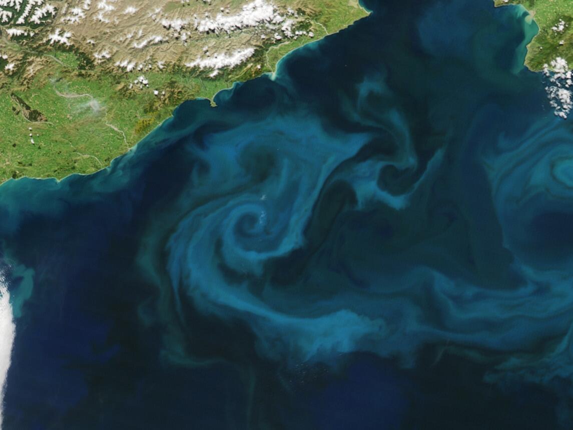 Bild zu Phytoplankton