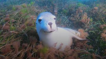 Bild zu Seelöwe, Australien, Kamera, Zutrauen