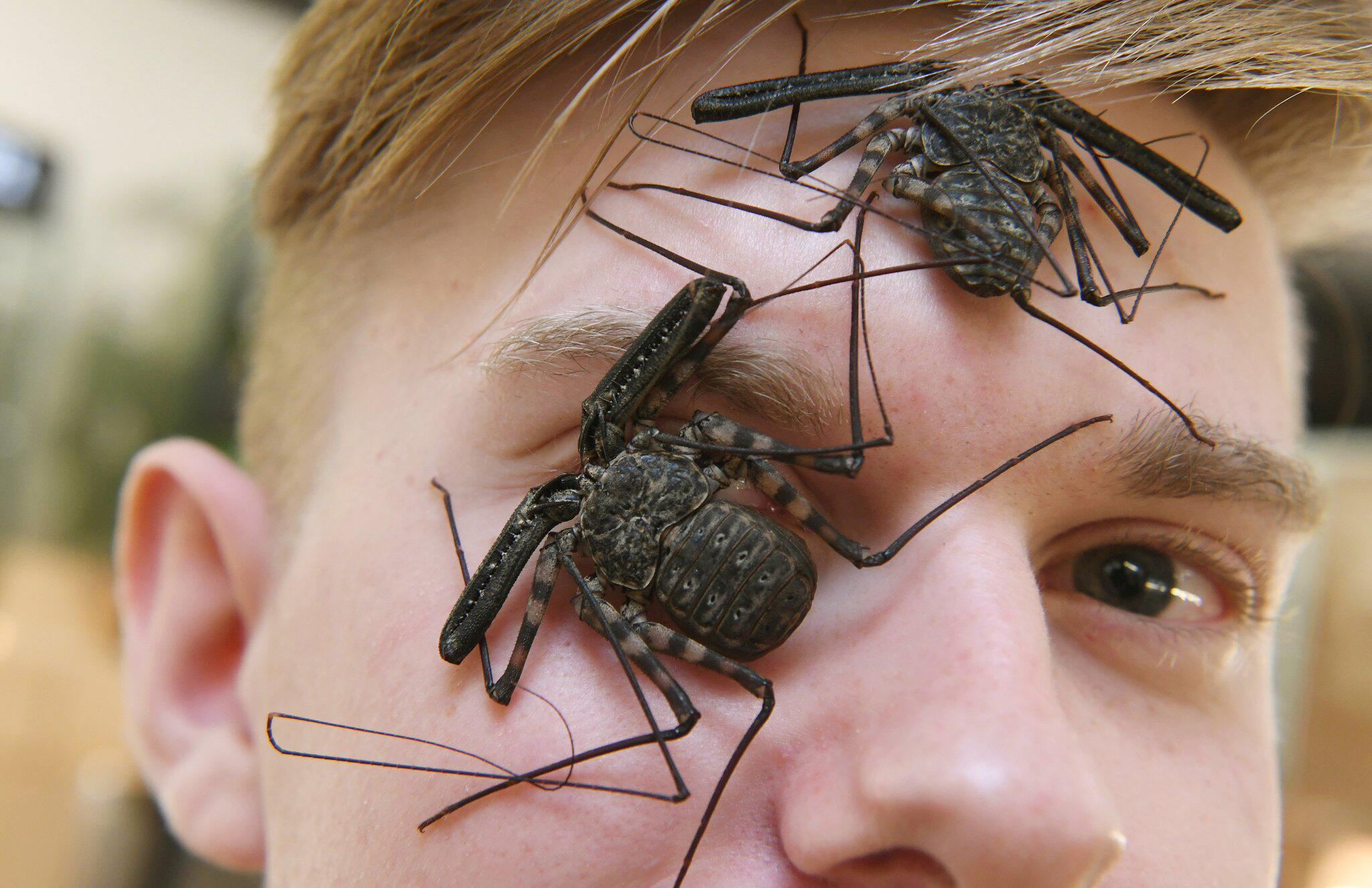 Bild zu Insektenzüchter Adrian Kozakiewicz