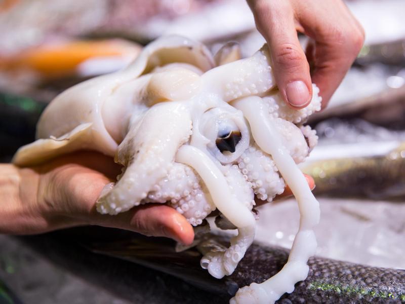 Bild zu Oktopus richtig zubereiten