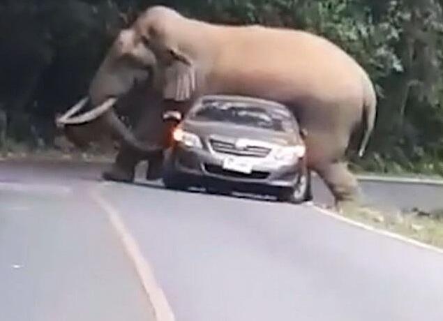 Bild zu Elefant, Thailand, Auto