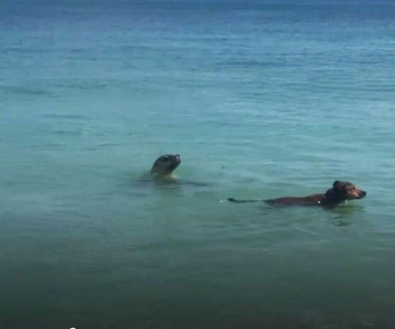 Bild zu Hund und Seehund
