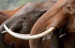 Elefanten als Urlaubsattraktion