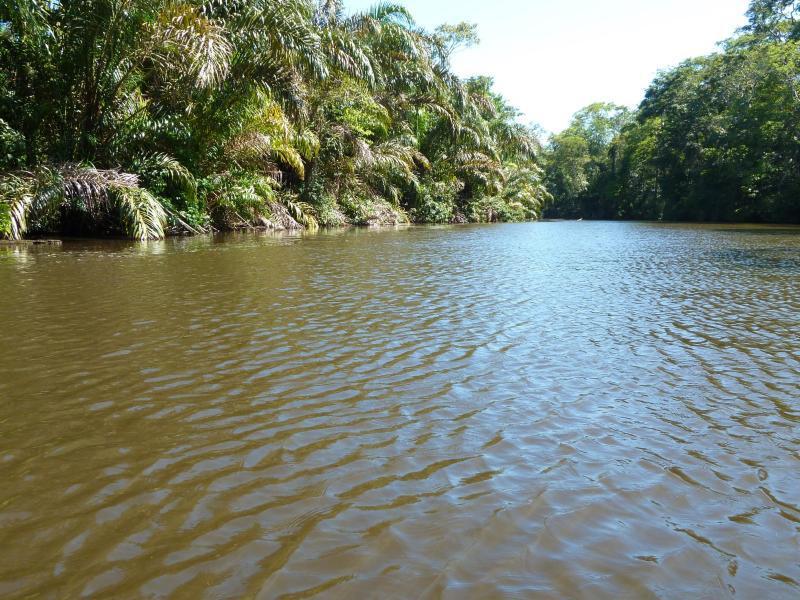 Bild zu Wasserweg zum Tortuguero-Nationalpark