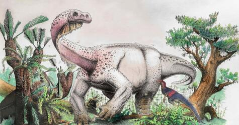 Dinosaurier «Ledumahadi mafube»