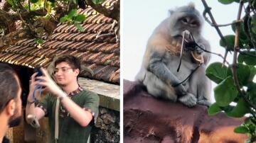 Bild zu Affe, Brille