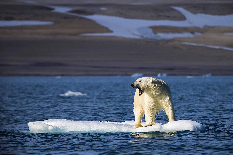 Bild zu Eisbär