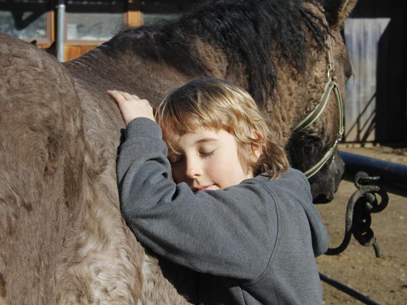 Bild zu Menschenfreundliche Curly-Horses