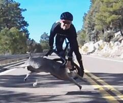 Radfahrer, Arizona, Hirsch, Unfall, Kollision, USA