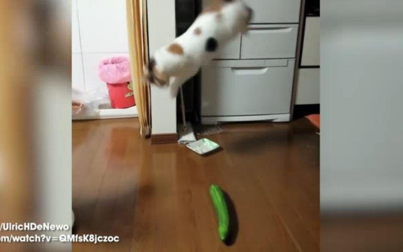 Bild zu Katzen die keine Gurken mögen