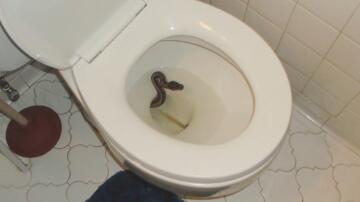 Bild zu Python im Klo