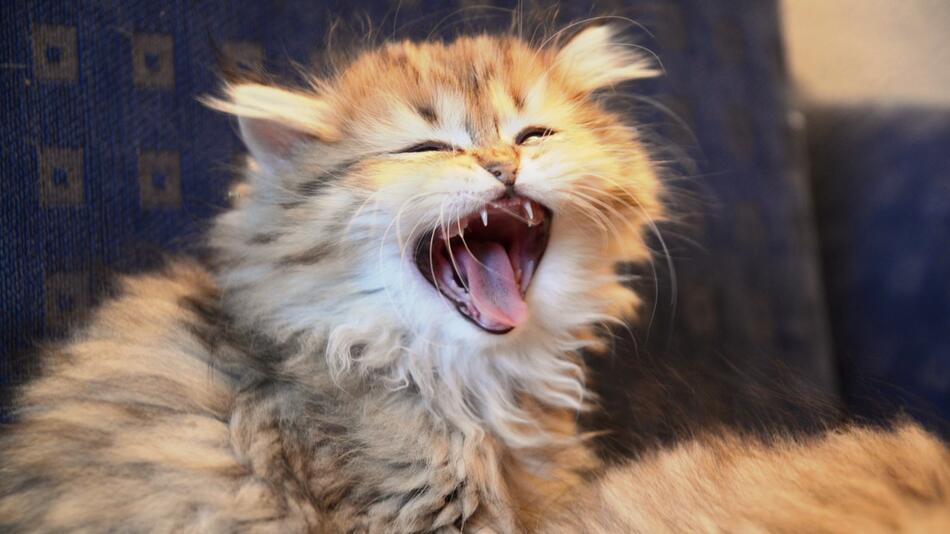 Gezwitscher auf Beutejagd: Die Sprache der Katzen verstehen