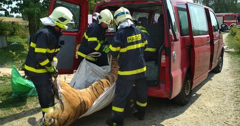 Geschäfte mit Tigern und Löwen in Tschechien