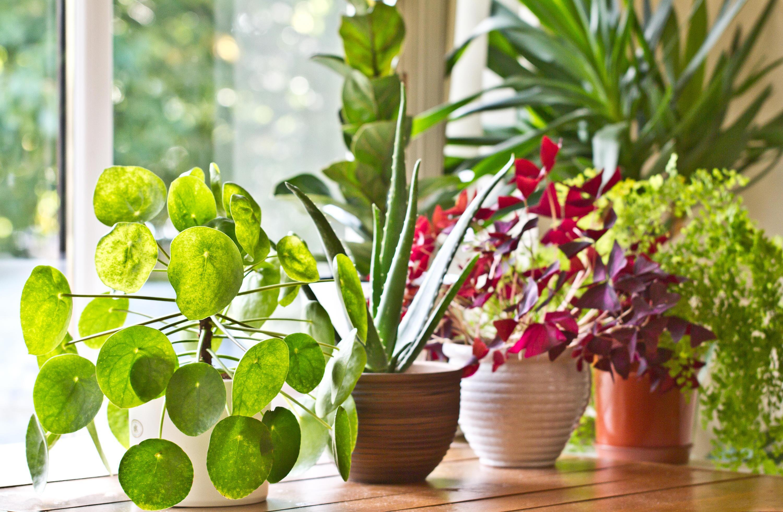 Bild zu Pflanzen, Wasser, Blumen, Gießen, Urlaub, Bewässerungssystem, Automatisch