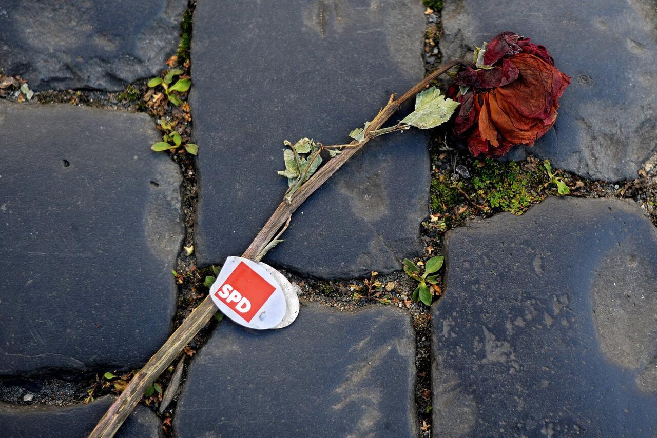 Bild zu Verwelkte SPD-Rose