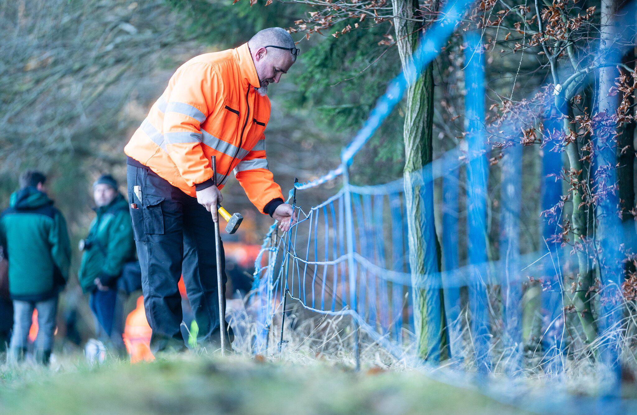 Bild zu Schutzzäune gegen Afrikanische Schweinepest in Sachsen