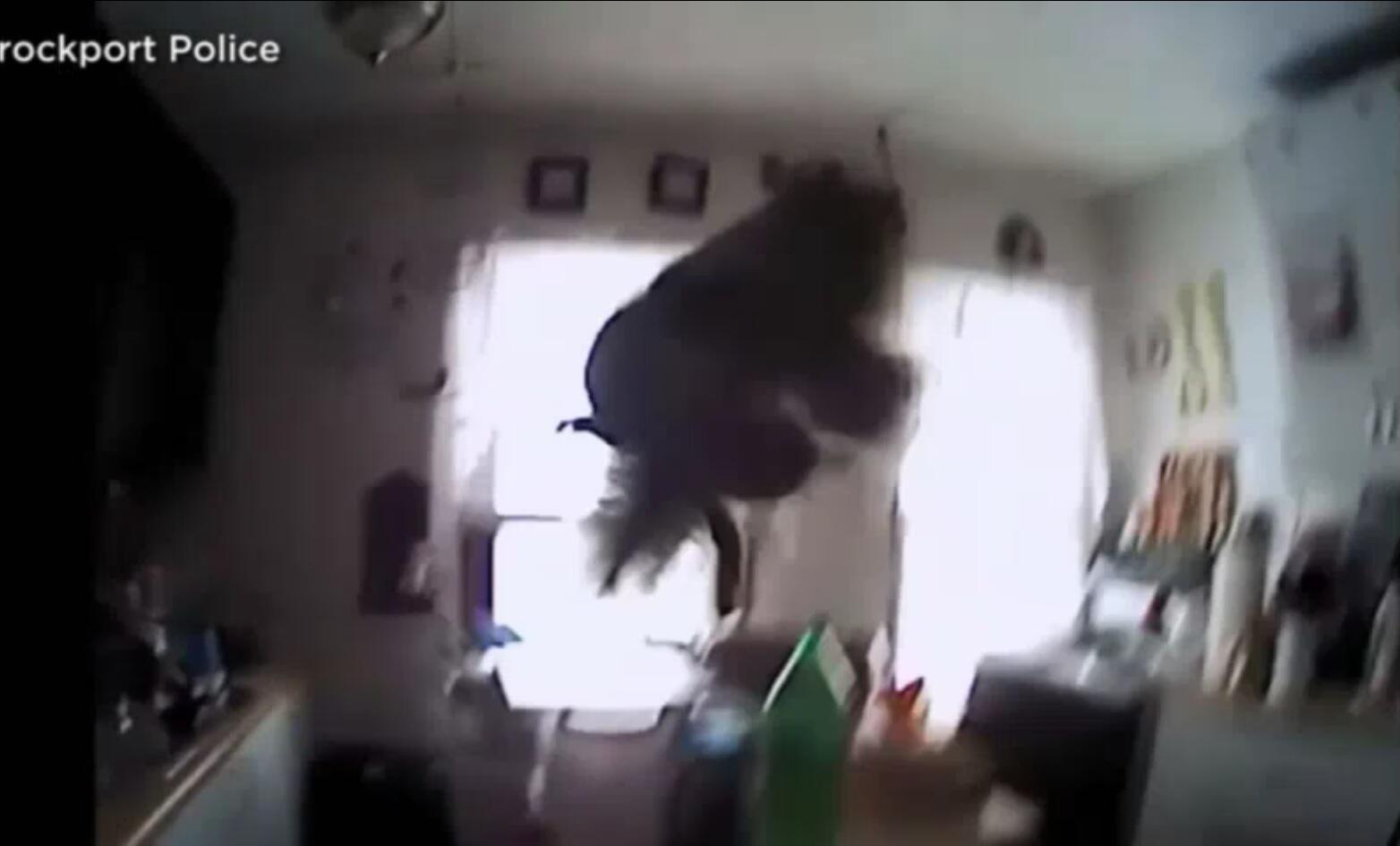 Bild zu Eichhörnchen