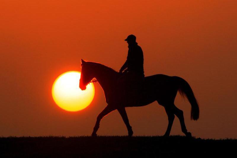 Reiter und Pferd im Sonnenuntergang