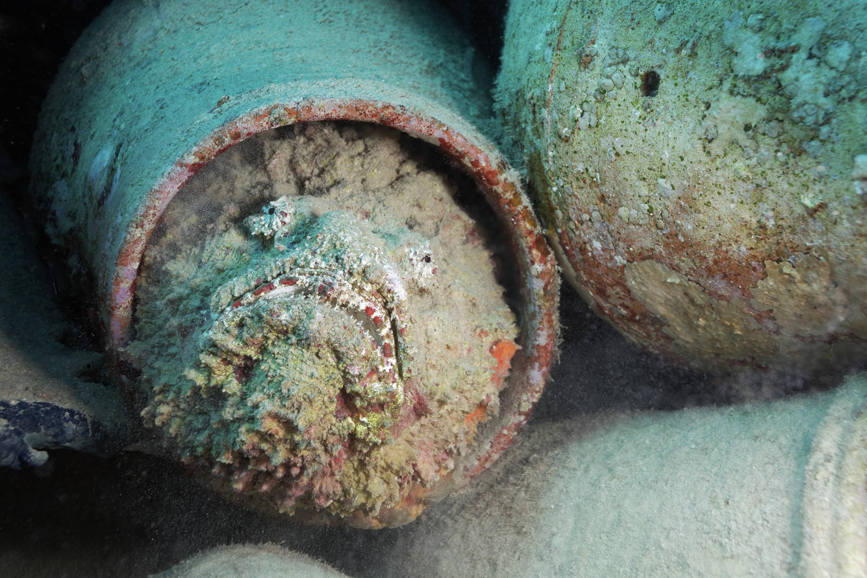 Bild zu Steinfisch