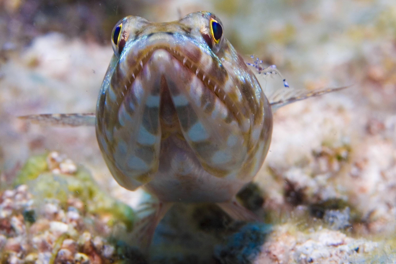 Bild zu Eidechsenfisch