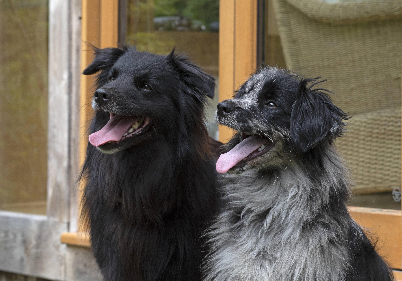 Bild zu Hunde