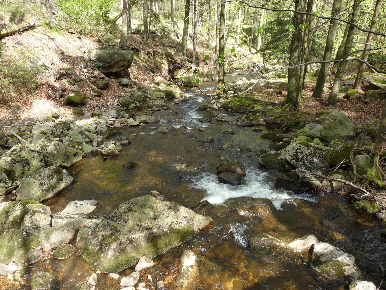 Bild zu Nationalpark Harz