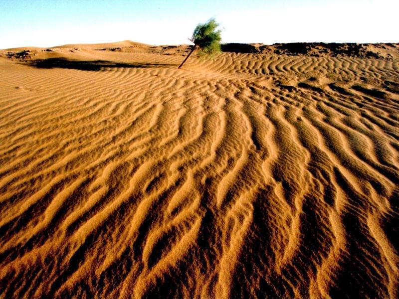 Bild zu Wüste