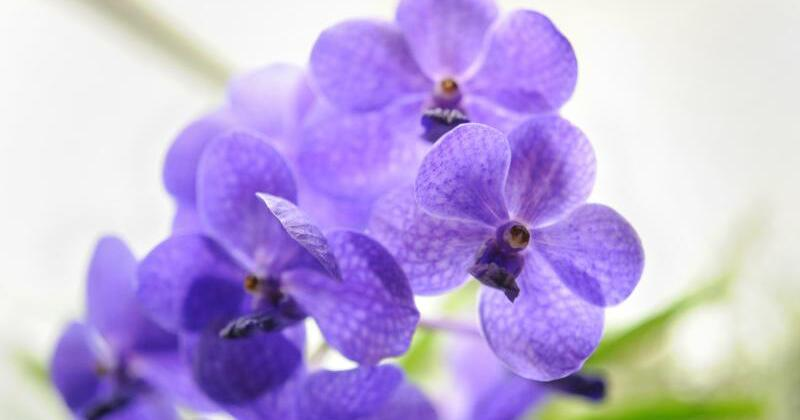 orchideen brauchen im fr hling extra pflege gmx. Black Bedroom Furniture Sets. Home Design Ideas