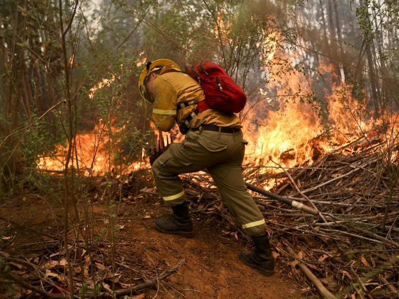 Bild zu Waldbrände in Chile