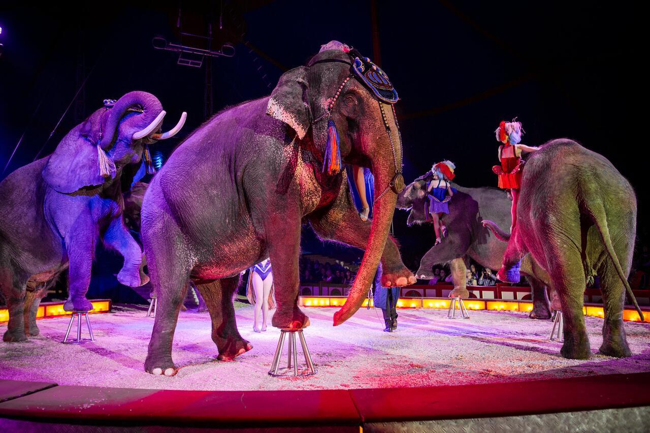Bild zu Elefanten Circus Krone