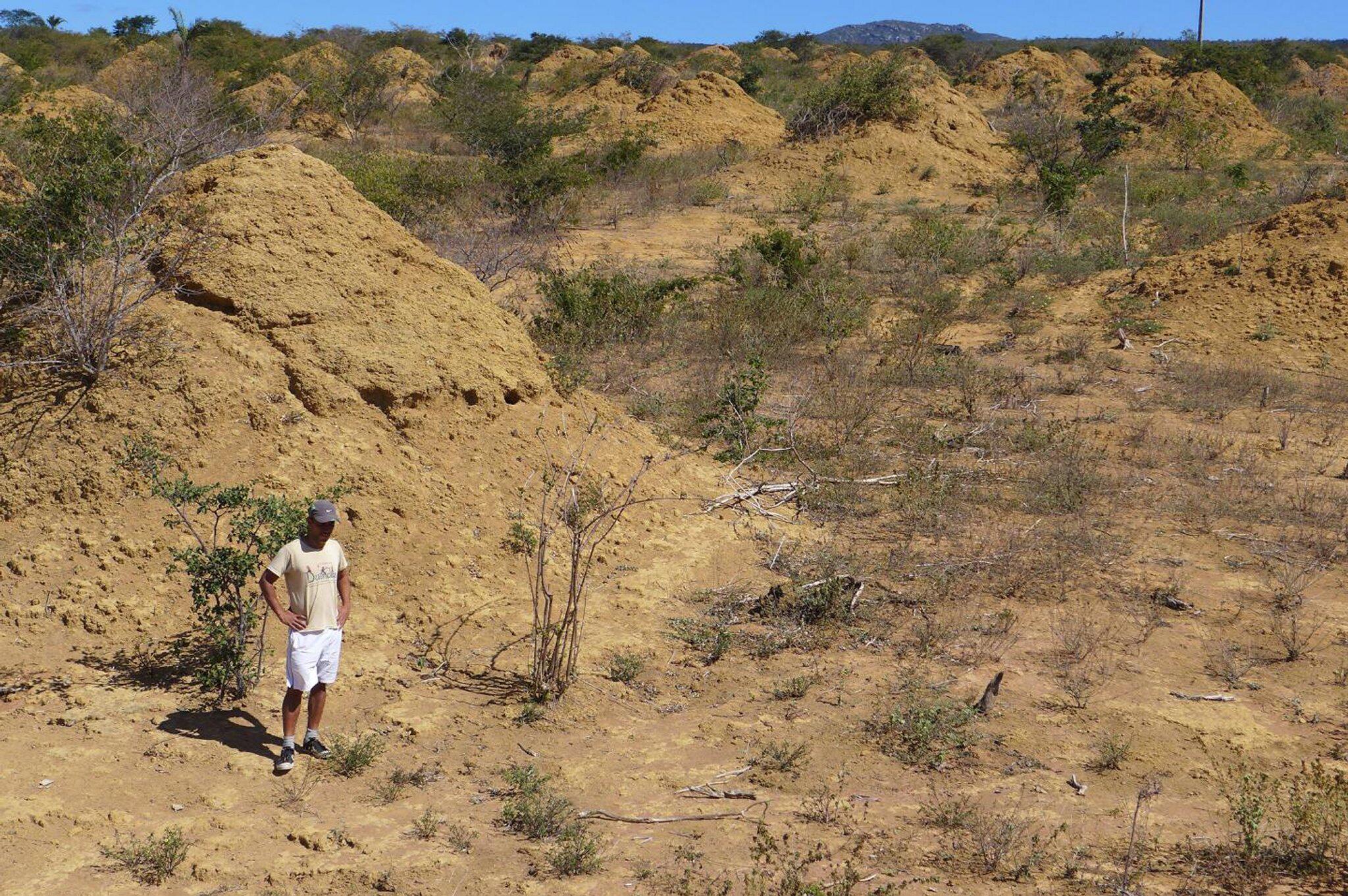 Bild zu Termitenhügel überdauern Jahrtausende