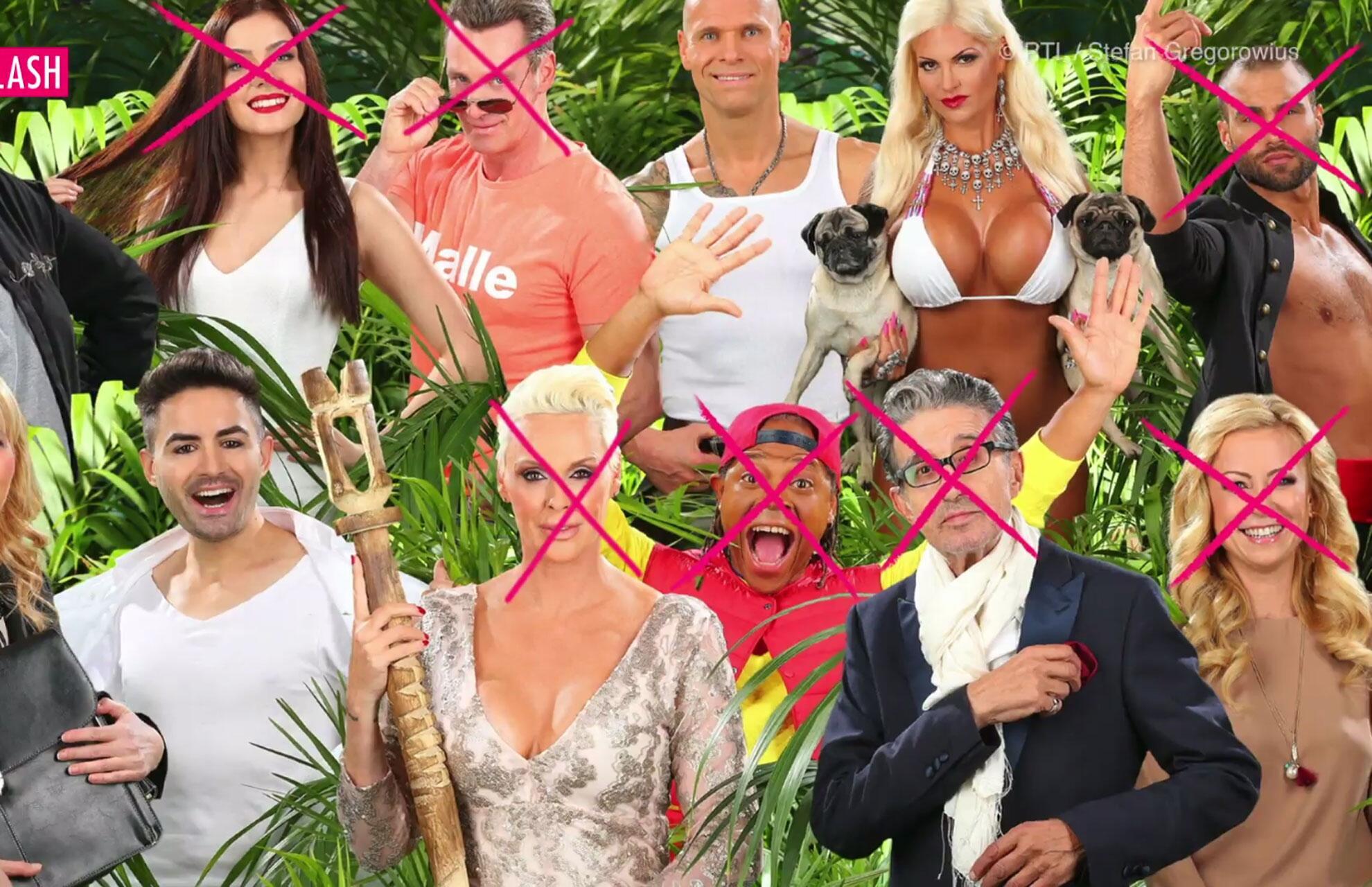 Bild zu Dschungel-Promiflash