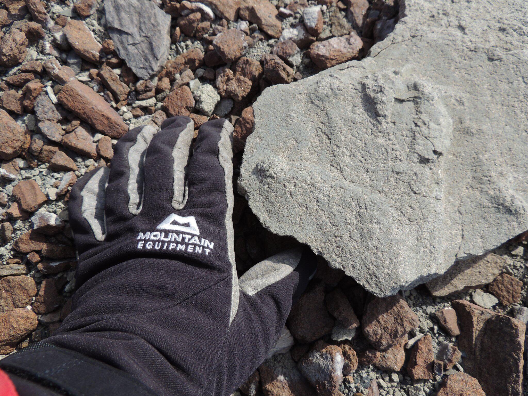 Bild zu 200 Millionen Jahre alter Saurier-Fußabdruck