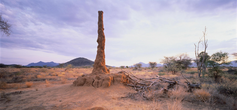 Bild zu Termiten