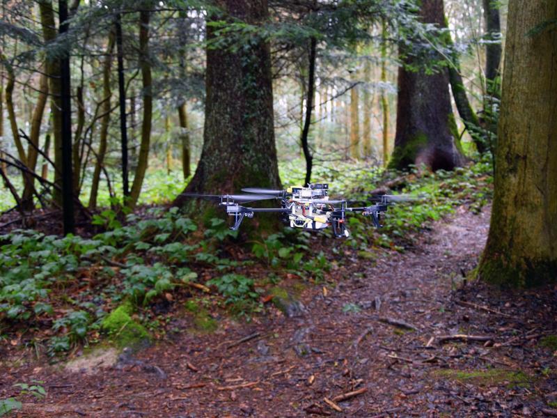 Bild zu Suche nach Vermissten im Wald