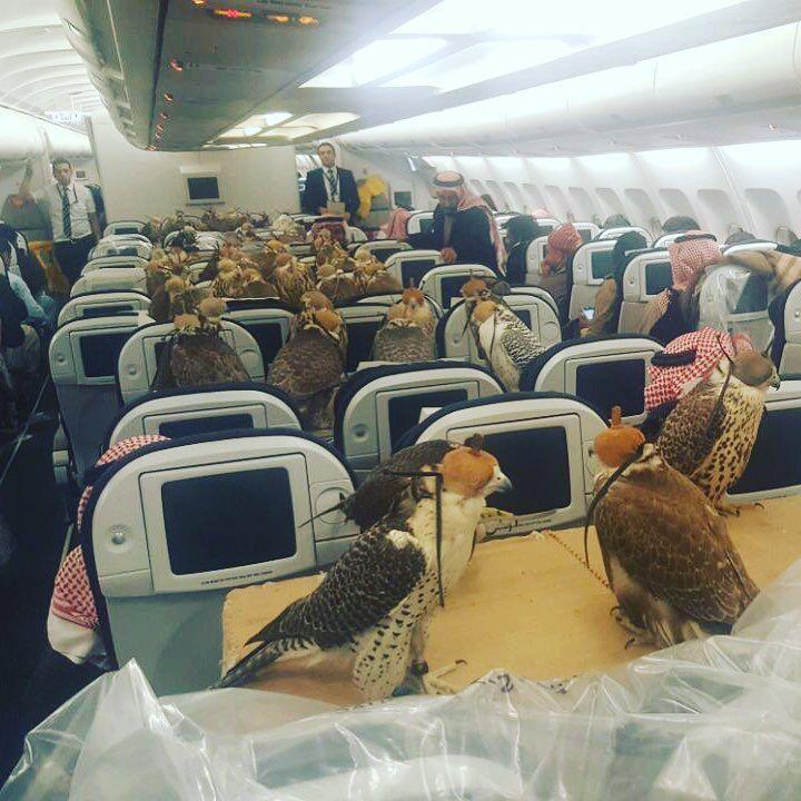 Falken im Flugzeug